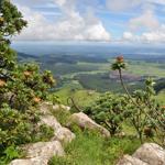 Biodiversity escarpment