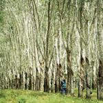 Biodiversity trees
