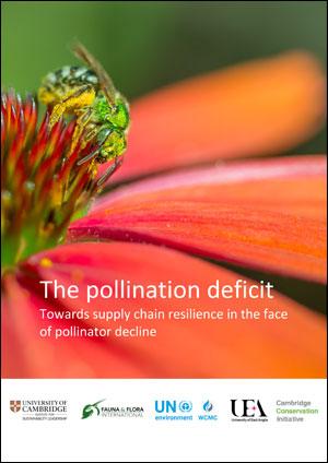 The pollination deficit